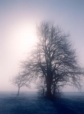 winter03_2